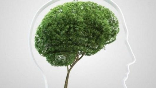 Растения, которые нельзя держать дома